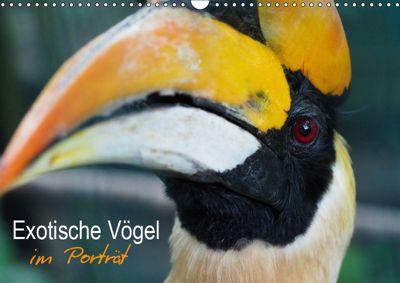 Exotische Vögel im Porträt (Wandkalender 2019 DIN A3 quer), Christina Williger