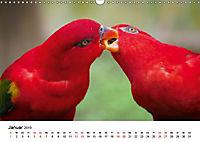Exotische Vögel im Porträt (Wandkalender 2019 DIN A3 quer) - Produktdetailbild 1