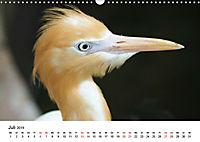 Exotische Vögel im Porträt (Wandkalender 2019 DIN A3 quer) - Produktdetailbild 7