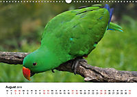 Exotische Vögel im Porträt (Wandkalender 2019 DIN A3 quer) - Produktdetailbild 8