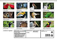 Exotische Vögel im Porträt (Wandkalender 2019 DIN A3 quer) - Produktdetailbild 13