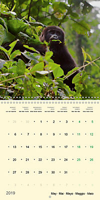 Facing Mountain Gorillas in Uganda (Wall Calendar 2019 300 × 300 mm Square) - Produktdetailbild 5