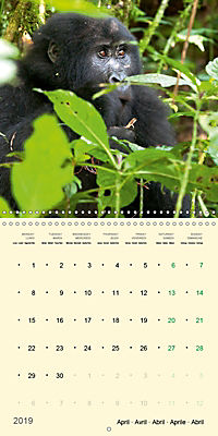 Facing Mountain Gorillas in Uganda (Wall Calendar 2019 300 × 300 mm Square) - Produktdetailbild 4