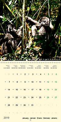 Facing Mountain Gorillas in Uganda (Wall Calendar 2019 300 × 300 mm Square) - Produktdetailbild 1