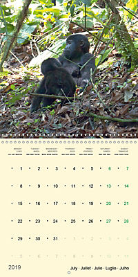 Facing Mountain Gorillas in Uganda (Wall Calendar 2019 300 × 300 mm Square) - Produktdetailbild 7