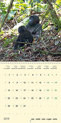 Facing Mountain Gorillas in Uganda (Wall Calendar 2019 300 × 300 mm Square) - Produktdetailbild 7