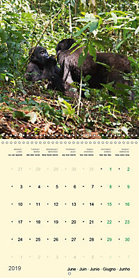 Facing Mountain Gorillas in Uganda (Wall Calendar 2019 300 × 300 mm Square) - Produktdetailbild 6
