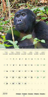Facing Mountain Gorillas in Uganda (Wall Calendar 2019 300 × 300 mm Square) - Produktdetailbild 10