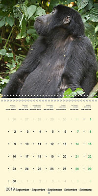 Facing Mountain Gorillas in Uganda (Wall Calendar 2019 300 × 300 mm Square) - Produktdetailbild 9