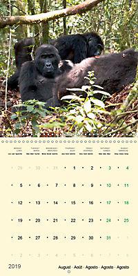Facing Mountain Gorillas in Uganda (Wall Calendar 2019 300 × 300 mm Square) - Produktdetailbild 8