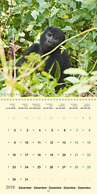Facing Mountain Gorillas in Uganda (Wall Calendar 2019 300 × 300 mm Square) - Produktdetailbild 12