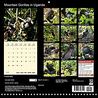 Facing Mountain Gorillas in Uganda (Wall Calendar 2019 300 × 300 mm Square) - Produktdetailbild 13