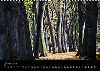 Fahrrad-Hauptstadt MÜNSTER im goldenen Grün (Wandkalender 2019 DIN A2 quer) - Produktdetailbild 1