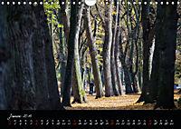 Fahrrad-Hauptstadt MÜNSTER im goldenen Grün (Wandkalender 2019 DIN A4 quer) - Produktdetailbild 1