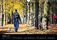 Fahrrad-Hauptstadt MÜNSTER im goldenen Grün (Wandkalender 2019 DIN A4 quer) - Produktdetailbild 10