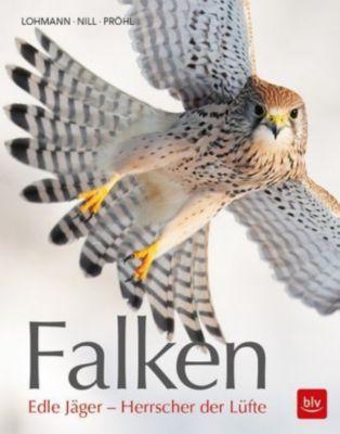 Falken - Michael Lohmann |