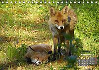 Familie Fuchs hautnah in Berlin (Tischkalender 2019 DIN A5 quer) - Produktdetailbild 2