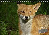 Familie Fuchs hautnah in Berlin (Tischkalender 2019 DIN A5 quer) - Produktdetailbild 5