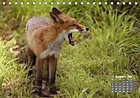 Familie Fuchs hautnah in Berlin (Tischkalender 2019 DIN A5 quer) - Produktdetailbild 8