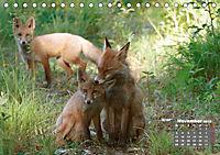 Familie Fuchs hautnah in Berlin (Tischkalender 2019 DIN A5 quer) - Produktdetailbild 11
