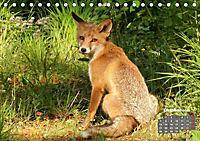 Familie Fuchs hautnah in Berlin (Tischkalender 2019 DIN A5 quer) - Produktdetailbild 10