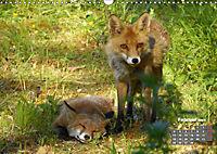 Familie Fuchs hautnah in Berlin (Wandkalender 2019 DIN A3 quer) - Produktdetailbild 2