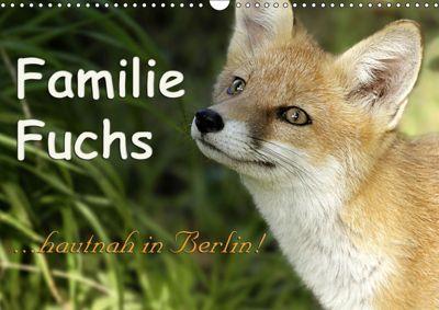 Familie Fuchs hautnah in Berlin (Wandkalender 2019 DIN A3 quer), Sabine Brinker