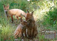 Familie Fuchs hautnah in Berlin (Wandkalender 2019 DIN A3 quer) - Produktdetailbild 11