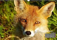Familie Fuchs hautnah in Berlin (Wandkalender 2019 DIN A3 quer) - Produktdetailbild 3