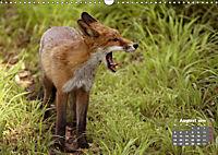 Familie Fuchs hautnah in Berlin (Wandkalender 2019 DIN A3 quer) - Produktdetailbild 8