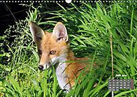 Familie Fuchs hautnah in Berlin (Wandkalender 2019 DIN A3 quer) - Produktdetailbild 7