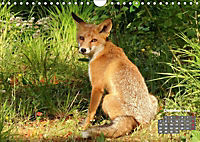 Familie Fuchs hautnah in Berlin (Wandkalender 2019 DIN A4 quer) - Produktdetailbild 10