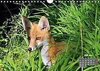 Familie Fuchs hautnah in Berlin (Wandkalender 2019 DIN A4 quer) - Produktdetailbild 7
