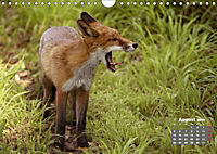 Familie Fuchs hautnah in Berlin (Wandkalender 2019 DIN A4 quer) - Produktdetailbild 8