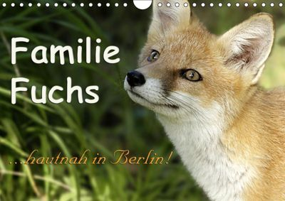 Familie Fuchs hautnah in Berlin (Wandkalender 2019 DIN A4 quer), Sabine Brinker