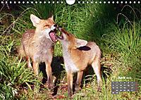 Familie Fuchs hautnah in Berlin (Wandkalender 2019 DIN A4 quer) - Produktdetailbild 4