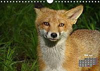 Familie Fuchs hautnah in Berlin (Wandkalender 2019 DIN A4 quer) - Produktdetailbild 5