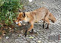 Familie Fuchs hautnah in Berlin (Wandkalender 2019 DIN A4 quer) - Produktdetailbild 6