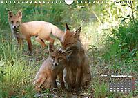 Familie Fuchs hautnah in Berlin (Wandkalender 2019 DIN A4 quer) - Produktdetailbild 11