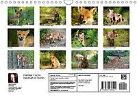 Familie Fuchs hautnah in Berlin (Wandkalender 2019 DIN A4 quer) - Produktdetailbild 13