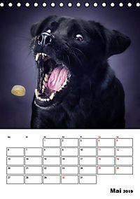 Fang das Leckerli (Tischkalender 2019 DIN A5 hoch) - Produktdetailbild 5