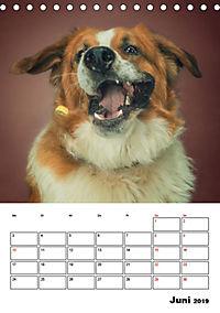 Fang das Leckerli (Tischkalender 2019 DIN A5 hoch) - Produktdetailbild 6