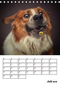 Fang das Leckerli (Tischkalender 2019 DIN A5 hoch) - Produktdetailbild 7