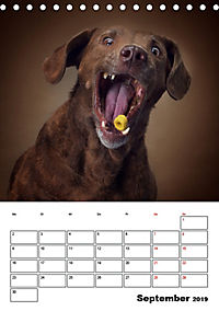 Fang das Leckerli (Tischkalender 2019 DIN A5 hoch) - Produktdetailbild 9