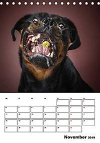Fang das Leckerli (Tischkalender 2019 DIN A5 hoch) - Produktdetailbild 11