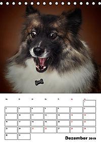 Fang das Leckerli (Tischkalender 2019 DIN A5 hoch) - Produktdetailbild 12