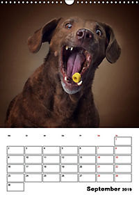 Fang das Leckerli (Wandkalender 2019 DIN A3 hoch) - Produktdetailbild 9