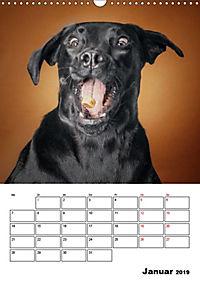Fang das Leckerli (Wandkalender 2019 DIN A3 hoch) - Produktdetailbild 1