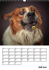 Fang das Leckerli (Wandkalender 2019 DIN A3 hoch) - Produktdetailbild 7