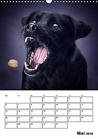 Fang das Leckerli (Wandkalender 2019 DIN A3 hoch) - Produktdetailbild 5